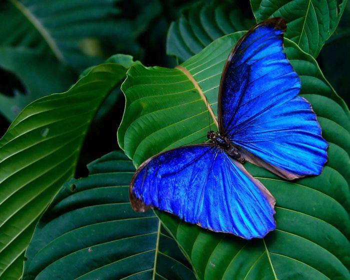 Галерея бабочек - Bilimland.kz